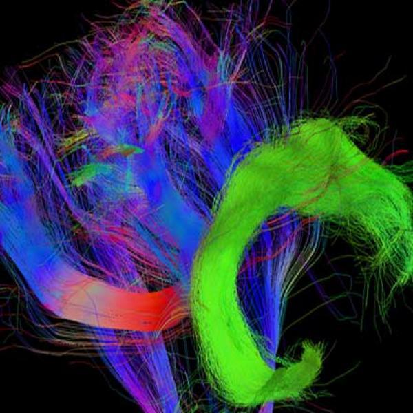 Нейропсихология: почему мы понимаем других? - Психология отношений